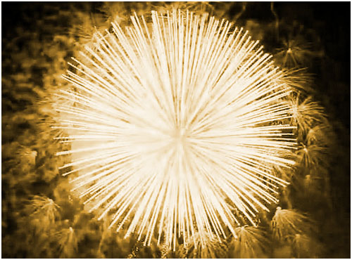 Feuerwerk Sonneberg, Hochzeitsfeuerwerk Sonneberg, Geburtstagsfeuerwerk Sonneberg